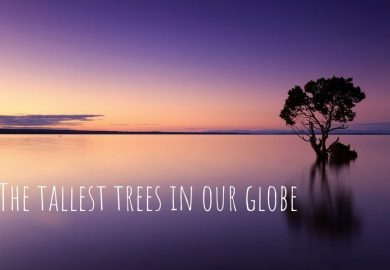 Gain knowledge about the tallest trees in our globe