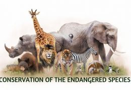 Conservation of the endangered species from the death of line