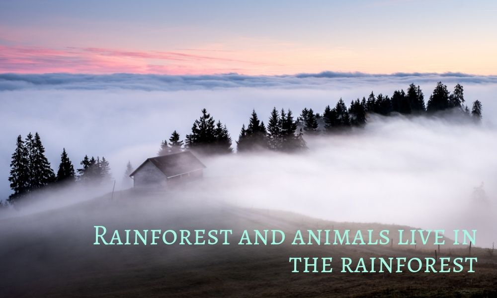Some facts about the rainforest and know what animals live in the rainforest